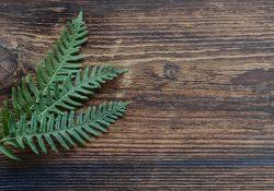Kunstige planter - når der ikke er tid eller overskud til de levende af slagsen