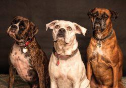 Sundt hundemad
