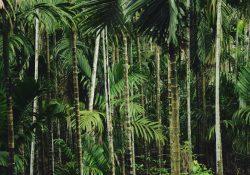 Bæredygtige bambusgaver til kollegaer og kunder
